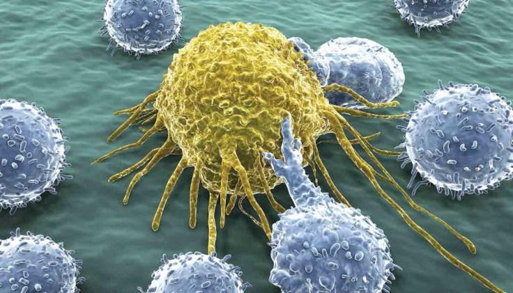 T cells.tif