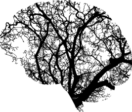 brain-2146817_640