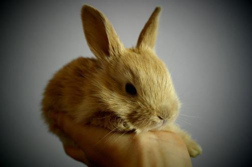 rabbit-373693_640
